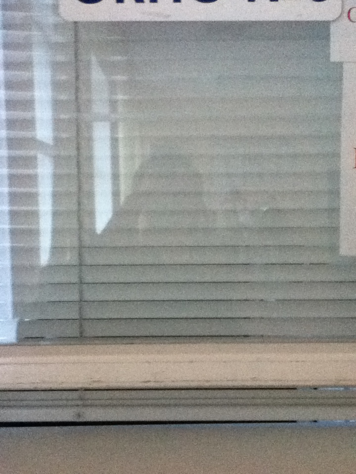 Вместо девушки, окно и жалюзи