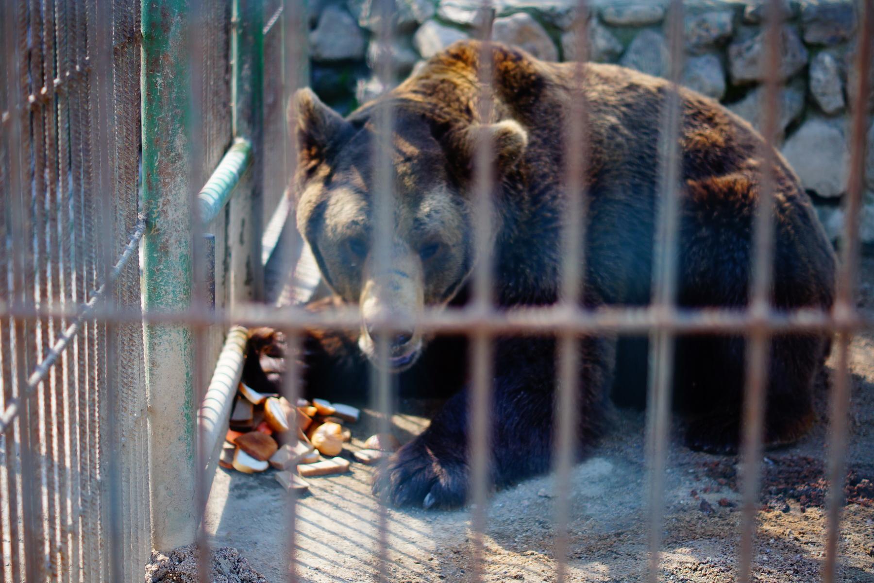 Медведь на страссе М4.