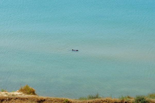 Посёлок Волна. Дельфины.
